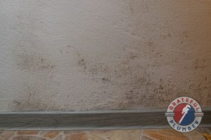 A Picture of Mold Growing On a Wall Towards the Floor